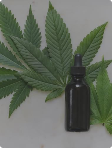 high cbd marijuana seeds