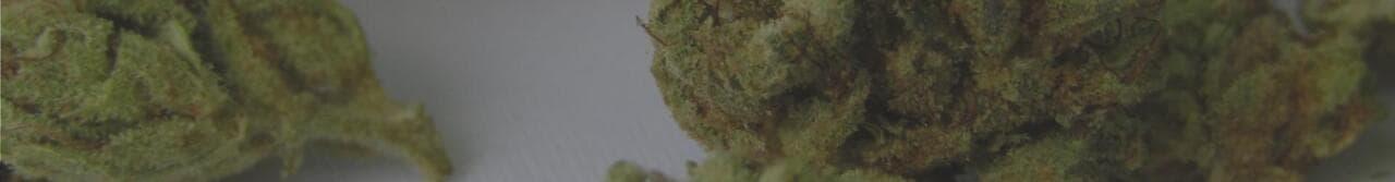 marijuana seeds autoflowering