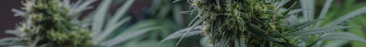Girl Smoking Marijuana