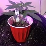 Shipped Fast & Seeds Germinated